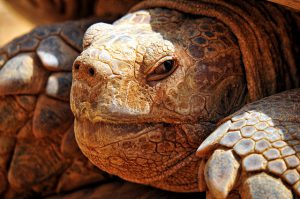 turtle-criss-crossed-621372_640